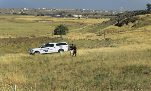 Scott Sommerdorf   |  The Salt Lake Tribune Unified police search a field where at least nine horse were found to be abandoned without water, Friday, July 18, 2014. Many of them died before help could reach them.