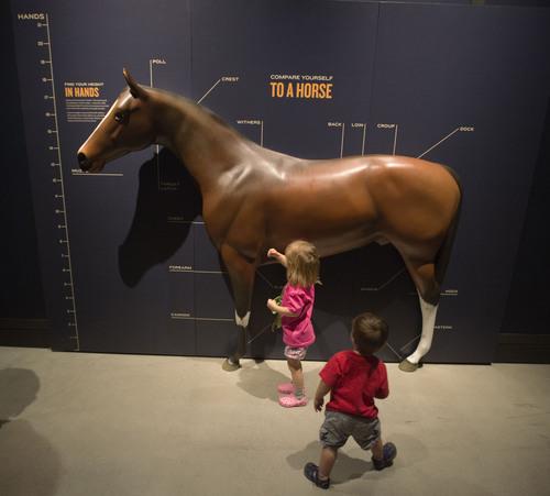 The Horse Natural History Museum Of Utah