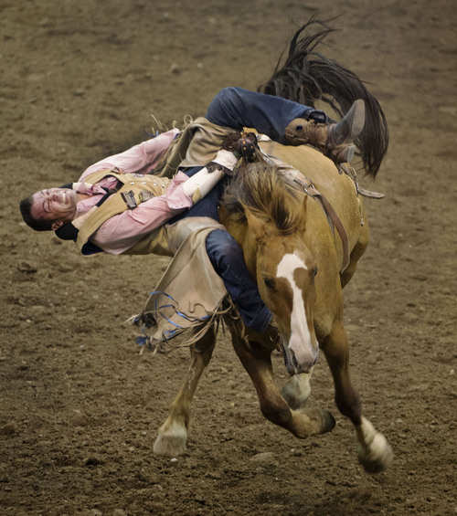 Steve Griffin     The Salt Lake Tribune   Kody Lamb, of Sherwood Park, Alberta, Canada, grits his teeth as he tries to hang on during the bareback competition during the Days of '47 Rodeo at EnergySolutions Arena in Salt Lake City, Utah Wednesday, July 23, 2014.