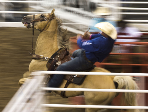 Steve Griffin     The Salt Lake Tribune   Ty Erickson, of Helena, Montana, charges from the chute during the steer wrestling competition during the Days of '47 Rodeo at EnergySolutions Arena in Salt Lake City, Utah Wednesday, July 23, 2014.