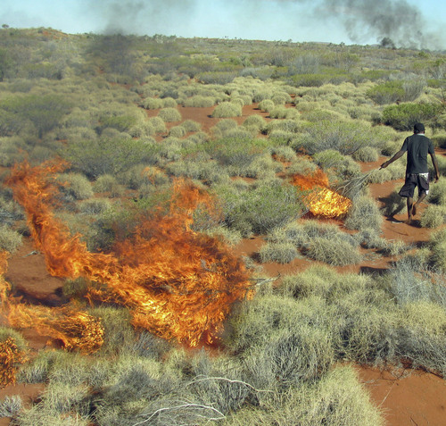 (Jenny Chang | Stanford University)  A member of the Martu Aboriginal community in western Australia sets fire to spinifex grass as a way to expose burrows of sand monitor lizards, which the Martu eat. Kangaroos are hunted in the same areas. A new study from the University of Utah and Stanford University found that setting such fires helps boost kangaroo populations by encouraging the growth of different types of vegetation.