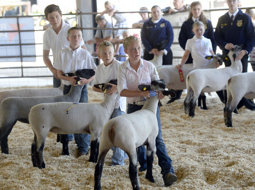 Al Hartmann  |  The Salt Lake Tribune  FFA members listen to the judges' comments about their suffolk sheep as they show them at the Junior Livestock show at the Salt Lake County Fair Thursday August 7, 2014.  The fair runs from 10 a.m. to 10 p.m. through Saturday.