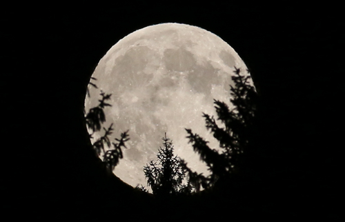 """The full moon peeks through trees in a wood near Rasing, Austria, Sunday, Aug. 10, 2014. The phenomenon, which scientists call a """"perigee moon,"""" occurs when the moon is near the horizon and appears larger and brighter than other full moons. (AP Photo/Ronald Zak)"""