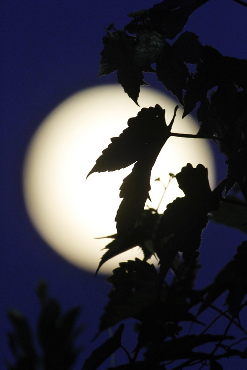Climbing vines are silhouetted by the supermoon above Edgartown, Mass., Sunday, Aug. 10, 2014, on the island of Martha's Vineyard. President Barack Obama and his family are vacationing on the island. (AP Photo/Jacquelyn Martin)