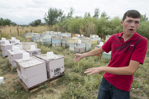 Rick Egan  |  The Salt Lake Tribune  Bryce Bunderson, Deweyville, talks about the bees that were recently stolen from his hives in Layton, Wednesday, August 13, 2014