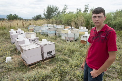 Rick Egan  |  The Salt Lake Tribune  Bryce Bunderson, Deweyville, with the hives in Layton, where his bees were   stolen.  Wednesday, August 13, 2014