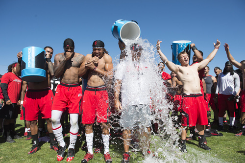 Rick Egan  |  The Salt Lake Tribune Kenneth Scott and Dres Anderson and Andy Phillips (far right) await their turn as Utah head coach Kyle Whittingham (center) has ice water poured on his head as part of the Ice Bucket Challenge, to raise awareness for ALS, Friday, August 15, 2014