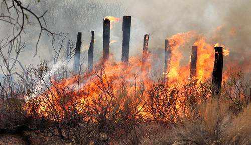 A fence is in the middle of the Way Fire near the top of Bristlecone in Wofford Heigts, Calif, Monday, Aug. 18, 2014. The fire in Wofford Heights near Lake Isabella has grown to about slightly more than 1 square mile, or 800 acres, the U.S. Forest Service said.  (AP Photo/The Bakersfield Californian, Casey Christie)  MANDATORY CREDIT; MAGS OUT; NO SALES; ONLINE OUT; TV OUT