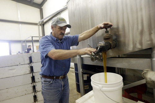 In this Wednesday, July 16, 2014 photo, Gene Brandi pours honey onto a bucket at the Gene Brandi Apiary in Los Banos, Calif. The state is traditionally one of the country's biggest honey producers, with abundant crops and wildflowers that provide nectar that bees turn into honey. But a three-year drought has left hillsides barren and forced farmers to tear out orchards and leave fields fallow. (AP Photo/Marcio Jose Sanchez)