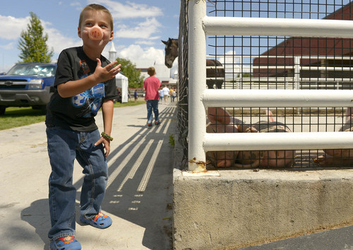 Leah Hogsten  |  The Salt Lake Tribune Hudson Moon, 5, grabs his snout as the smell from the pig pen gets to his nose. Thanksgiving Point celebrated all things pig, especially bacon, with its Bacon Bash, Saturday, August 23, 2014. The event included games and pony and wagon rides.