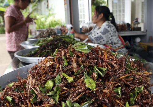 In this photo taken Aug. 5, 2014, a woman, right, sells fried grasshoppers and other fried insects at a stand at a gas station in Nakhon Ratchasima province, northeastern Thailand. Six-legged livestock, as the U.N. Food and Agriculture Organization calls them, are also easier on the environment than their lesser-legged counterparts. It takes 2,900 gallons of water, 25 pounds of feed and extensive acreage to produce one pound of beef and just one gallon of water, two pounds of feed and a small cubicle to produce a pound of crickets. (AP Photo/Apichart Weerawong)