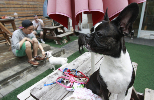 In this photo taken on Tuesday, Aug. 26, 2014, a man plays with his his best friend at a dog cafe in Seoul, South Korea. For more than 30 years, chef and restaurant owner Oh Keum-il built her expertise in cooking one traditional South Korean delicacy: dog meat. Animal rights activists protest nearby, urging people not to eat man's best friend. Young South Koreans grow up watching TV shows about raising puppies and other pets, which sapped appetite for dog meat, said Oh. (AP Photo/Joyce Lee)