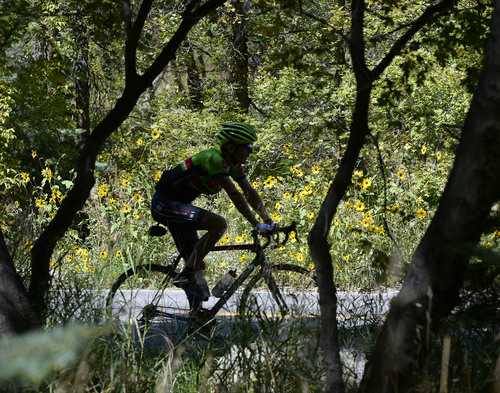 Al Hartmann     The Salt Lake Tribune End of Summer?  Bicyclist takes a shady ride up Millcreek Canyon Tuesday September 2 as sunflowers reach their Summer peak.
