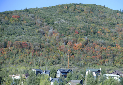 Al Hartmann     The Salt Lake Tribune The first hint of autumn is in the air as maple trees start to turn gold and red Tuesday September 2, 2014, at Pinecrest at the top of Parleys Canyon.