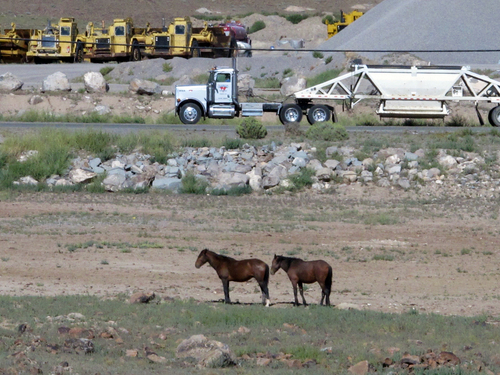 "Mustangs graze at the Tahoe Reno Industrial Center 15 miles east of Sparks, Nev., Thursday, Sept. 4, 2014. Tesla Motors Inc. plans to build a 6,500 worker ""gigafactory"" to mass produce cheaper lithium batteries for its next line of more-affordable electric cars near the center. (AP Photo/Scott Sonner)"