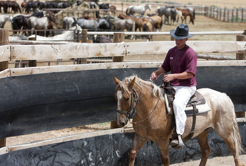 Photo by Jim Urquhart     The Salt Lake Tribune  An inmate works with four-year-old horse named Duke at the Wild Horse & Burro Program at the Utah State Prison in Gunnison in July 2010. The prison is ending the program and the Bureau of Land Management must remove the horses.