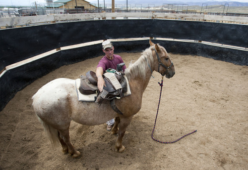 Photo by Jim Urquhart     The Salt Lake Tribune An inmate works with four-year-old horse named Duke at the Horse Gentling Program Thursday, July 29, 2010 at the Wild Horse & Burro Program at the Utah State Prison in Gunnison in July 2010. The prison is ending the program and the Bureau of Land Management must remove the horses.
