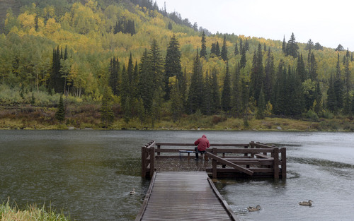 Al Hartmann  |  The Salt Lake Tribune Fisherman braves a cold rain Sunday September 21 sharing the autumn leaves in full splendor  with ducks at Silver Lake in Big Cottonwood Canyon