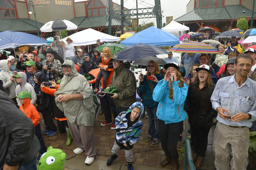 Leah Hogsten  |  The Salt Lake Tribune Onlookers react to Matt McConkie's new state record with his winning giant pumpkin at 1,731 pounds. The 10th Annual Giant Pumpkin Weigh Off at Thanksgiving Point, Saturday, September 27, 2014.