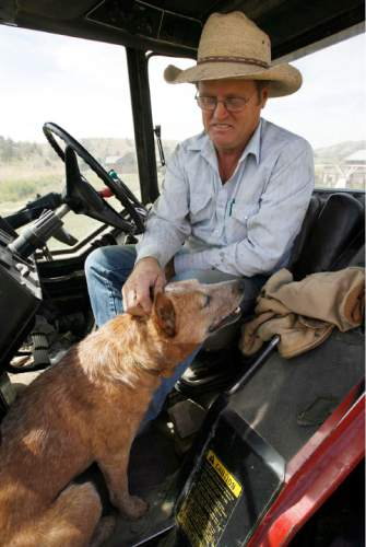 Francisco Kjolseth  |  The Salt Lake Tribune Jay Tanner, pets Nelson, his red healer cow dog as he takes a break from bailing grass in the Grouse Creek Valley. Cattlemen and brothers Blaine, Jay and Brent Tanner have been awarded conservation awards for the management of their operation, Della Ranches.  They run up to 1,000 cattle on some 192,000 acres of private, state-an Federally owned lands in the Grouse Creek Valley. The three are partners in a family ranch that's been operating in Box Elder County for more than 130 years.