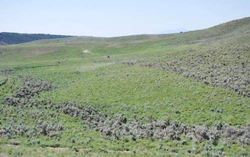 |  Courtesy Utah Natural Resources Conservation Service  The Tanner family is working with federal and state officials to make improvements on their land to benefit the greater sage grouse, which are petitioned for listing as threatened on the Endangered Species List. The Tanners have realized land management that benefits sage grouse is also good for other wildlife and their cattle.