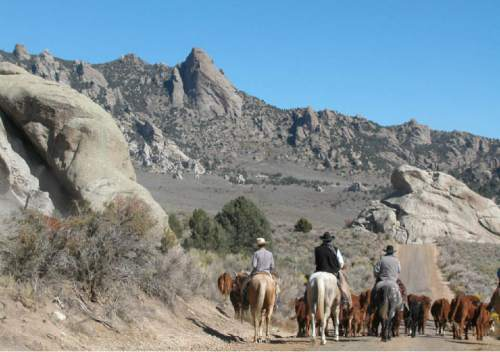 |  Courtesy Diane Tanner  The Tanner family works their ranch in Grouse Creek in the northwestern corner of Utah. The Tanners are working with federal and state officials to make improvements on their land to benefit the greater sage grouse, which are petitioned for listing as threatened on the Endangered Species List. The Tanners have realized land management that benefits sage grouse is also good for other wildlife and their cattle.