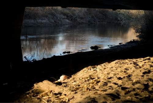 Lennie Mahler  |  The Salt Lake Tribune An area beneath an overpass at 3300 South and 1300 West along the Jordan River where police discovered a body of unknown age and gender in West Valley City, Utah, Monday, Dec. 1, 2014.