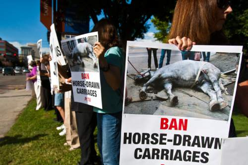 Chris Detrick  |  The Salt Lake Tribune People hold signs during a vigil for Jerry the horse put on by Utah Animal Rights Coalition outside of the Salt Lake City and County Building Tuesday August 27, 2013.