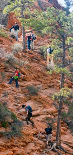 Al Hartmann  |  The Salt Lake Tribune  Hikers carefully make their way up a section of the Angel's Landing Trail in Zion National Park.    It's one of the premier hikes in the park which takes the hiker up and a steep rock spine that climbs to a magnificent view of the Virgin River and Zion Canyon below.  The hikes is not for those with fear of heights.  An anchor chain is embedded in the rock in steep places along the trail that hikers can grab onto for safety.