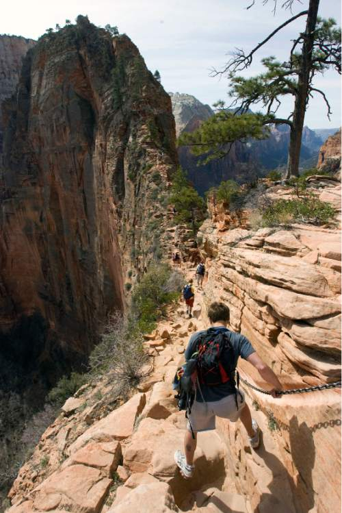 Al Hartmann  |  The Salt Lake Tribune  Hikers carefully make their way up the Angel's Landing Trail in Zion National Park.    It's one of the premier hikes in the park which takes the hiker up and a steep rock spine that climbs to a magnificent view of the Virgin River and Zion Canyon below.  The hikes is not for those with fear of heights.  An anchor chain is embedded in the rock in steep places along the trail that hikers can grab onto for safety.
