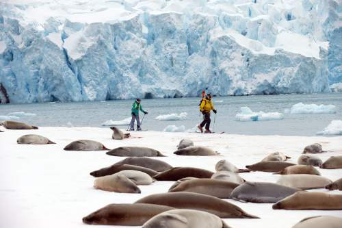 Salt Lake City residents Lilliana Libecki, 11, and her father, Mike Libecki, ski in Antarctica during a trip in November.  photos courtesy Mike Schirf
