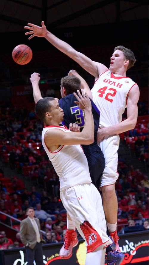 Utah forward Brekkott Chapman, left, and Utah forward Jakob Poeltl (42) pressure Carroll's Zach Taylor during an NCAA college basketball game Tuesday, Dec. 30, 2014, in Salt Lake City. (AP Photo/The Salt Lake Tribune, Leah Hogsten)