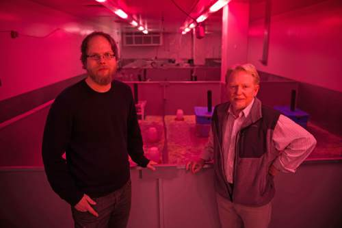 "Courtesy  |  Andy Brimhall, University of Utah Marketing and Communications  Bathed in reddish-pink light that means it is nighttime for mice, University of Utah biologists James Ruff and Wayne Potts stand in front of a series of ""mouse barns"" used in their latest study of the toxicity of sugars fed to mice in doses proportionate to the sugar consumption of many people. Mice cannot detect the pink light but people can, so it allows the researchers to work in the mouse barn area during nighttime for the mice."