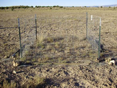 """Courtesy     Dustin Ranglack, USU A full exclosure, after one year in the study, in Utah's Henry Mountains. Comparison of the inside of the full exclosure to the partial exclosure reveals the """"lagomorph effect"""" – that is, the extent of consumption of forage by rabbits and hares."""