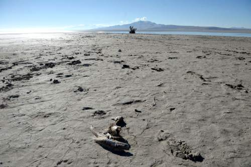 Al Hartmann  |  The Salt Lake Tribune A distant view of Antelope Island from the causeway shows mudflats that are usually submeged by the water of the Great Salt Lake Wednesday Jan. 21, 2015. The lake is approaching near-record lows.