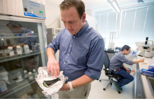Steve Griffin  |  The Salt Lake Tribune  Recursion Pharmaceuticals CEO Christopher Gibson hold experimental plates created in the company's lab in Research Park at the University of Utah in Salt Lake City, Monday, December 8, 2014. Recursion Pharmaceuticals is a start-up company at the University of Utah and It's scientists and engineers are taking an unusual approach to drug development, and hope to develop 100 drugs in 10 years. The company says it's strategy is two-fold. Instead of targeting specific molecular targets for a disease, Recursion makes a human cellular model of the disease and then targets the resulting phenotype (its observable characteristics of the cell) by testing the ability of compounds to restore misshapen and diseased human cells to their normal appearance and function. Doing so is a good predictor of a drug's success or failure.  And instead of starting from scratch with a new compound, their business model is to partner with manufacturers to salvage and repurpose drugs that passed early safety trials but never made it to market.