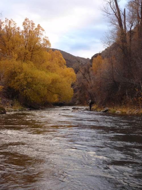 """An angler casts on the upper Weber River near Oakley. Private ownership of a 25-miles stretch of stream bed is facing a legal challenge by public-assess advocates who say this trout stream was once served as a """"highway of commerce"""" and should be accessible by the recreating public. Nineteenth century lumbermen floated thousands of railroad tie, mine timbers and saw logs through these waters, according to historical evidence entered at trial. Photo by Kris Olson."""