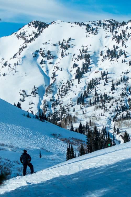 Trent Nelson  |  The Salt Lake Tribune A skier at the Alta Ski Resort, Wednesday February 11, 2015.