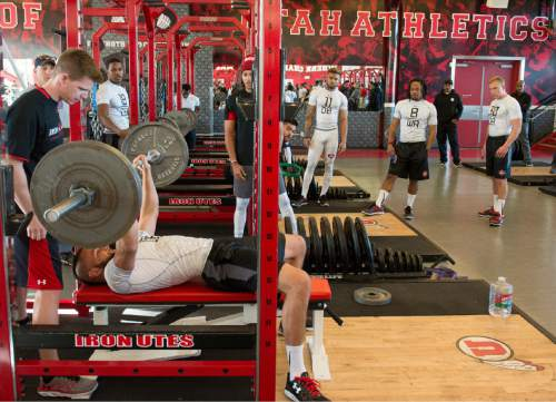 Rick Egan  |  The Salt Lake Tribune  Utah senior Brian Blechen does the bench press for NFL scouts in the Alex Smith Strength & Conditioning Center, Thursday, March 26, 2015.