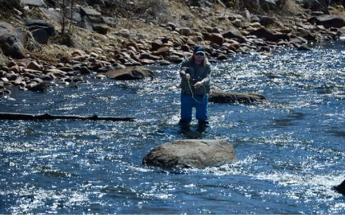 Scott Sommerdorf   |  The Salt Lake Tribune A fly fisherman casts his line in the middle Provo river near Midway, Sunday, March 8, 2015.