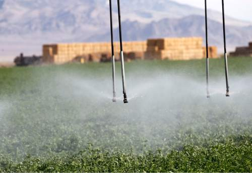Al Hartmann  |  Tribune file photo Water falls on alfalfa field from irrigation sprinkler on the Dean Baker ranch on the Nevada-Utah border.  Western Utah has experienced the driest 12 months in history this year despite the monsoonal rain in July and August.  It has affected farmers, ranchers and wildlife.