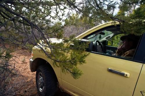 Chris Detrick  |  The Salt Lake Tribune Tree branches scrape rancher Chris Odekerken's truck as he drives on K 2855 on his property on Glendale Bench Wednesday May 8, 2013.
