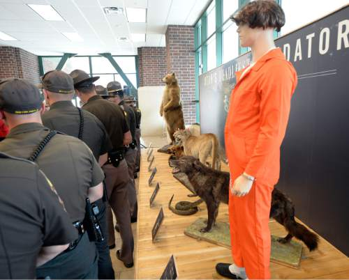 """Al Hartmann    The Salt Lake Tribune UHP troopers line up at a Memorial Day DUI prevention press conference at Scheels All Sports in Sandy on Thursday, May 21, 2015. Behind them at the store's entrance is a 20-foot exhibit, titled """"Utah's Deadliest Predators,"""" which features Utah's top seven predators. UHP said the deadliest is the drunk driver, who kills an average of 30 people per year."""