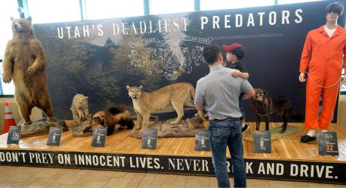 """Al Hartmann    The Salt Lake Tribune Stephen Wright and son Hudson, 3 check out the 20-foot exhibit, titled """"Utah's Deadliest Predators,"""" featuring Utah's top seven predators at a Utah HIghway Patrol Memorial Day DUI prevention press conference at Scheels All Sports in Sandy on Thursday, May 21, 2015. The deadliest is the drunk driver, right, who kills an average of 30 people per year."""