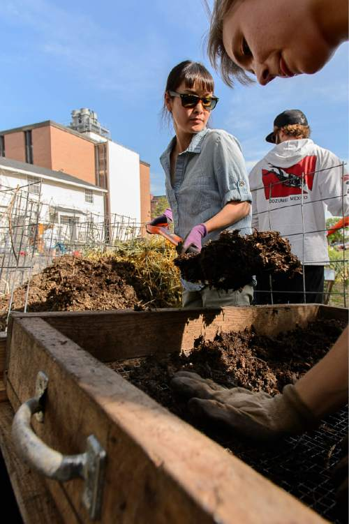 "Trent Nelson  |  The Salt Lake Tribune Rachel Fong and Ashlea Patterson sift compost at the Edible Campus Gardens at the University of Utah, Thursday June 4, 2015. The University is pledging to put 20 percent of its food budget toward ""real food"" by 2020. The state's flagship school of 30,000 joining dozens of campuses nationwide in a ""Real Food Challenge."" Right now, estimate leaders of a U. student group estimate that about 11 percent of U. food is ""real,"" meaning it is local, humane and tended by workers who are paid fair wages. The U. buys produce from local farms, as well as on-campus gardens."