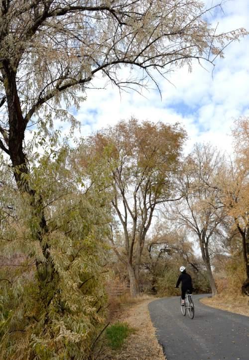 Al Hartmann  |  The Salt Lake Tribune Last beautiful day of Autumn? Bicyclist rides along the Jordan River Parkway trail in West Jordan Wednesday November 13.