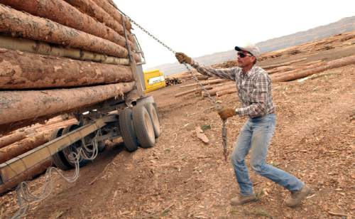 Lyle Davenport with Coleman & Harding Loging prepares a load for unloading at the up and running Escalante sawmill.  After a 5-month closing, brothers Steve, Scott and Shane Steed along with plenty of help, brought the business back providing essential jobs for the local population.    Francisco Kjolseth/The Salt Lake Tribune      09/24/2002