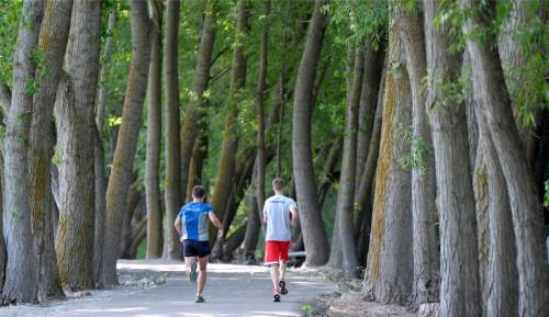 Al Hartmann  |  The Salt Lake Tribune Runners pass through the shade of Cottonwood trees along the Provo River Parkway Trail Friday June 13.