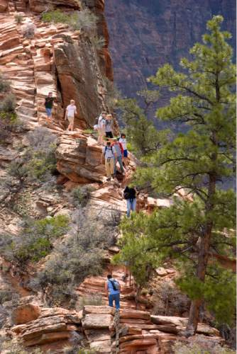 Zion National Park will turn 100 year old  this Summer.  Zion was established as Makuntaweap National Monument on July 31, 1909 by President William Taft.   Hikers pick their ways up and down the Angel's Landing Trail.   It's one of the premier hikes in the park which takes the hiker up  a steep rock spine that climbs to a magnificent view of the Virgin River and Zion Canyon below.  The hikes is not for those with fear of heights.  An anchor chain is embedded in the rock in steep places along the trail that hikers can grab onto for safety.   Al Hartmann/The Salt Lake Tribune     3/25/2009