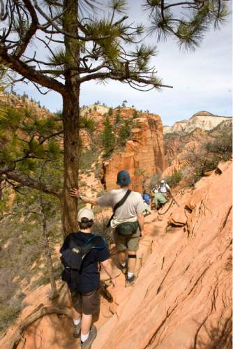 Zion National Park will turn 100 year old  this Summer.  Zion was established as Makuntaweap National Monument on July 31, 1909 by President William Taft.   Hikers pause as they decend the  Angel's Landing Trail.   It's one of the premier hikes in the park which takes the hiker up  a steep rock spine that climbs to a magnificent view of the Virgin River and Zion Canyon below.  The hikes is not for those with fear of heights.  An anchor chain is embedded in the rock in steep places along the trail that hikers can grab onto for safety.   Al Hartmann/The Salt Lake Tribune     3/25/2009